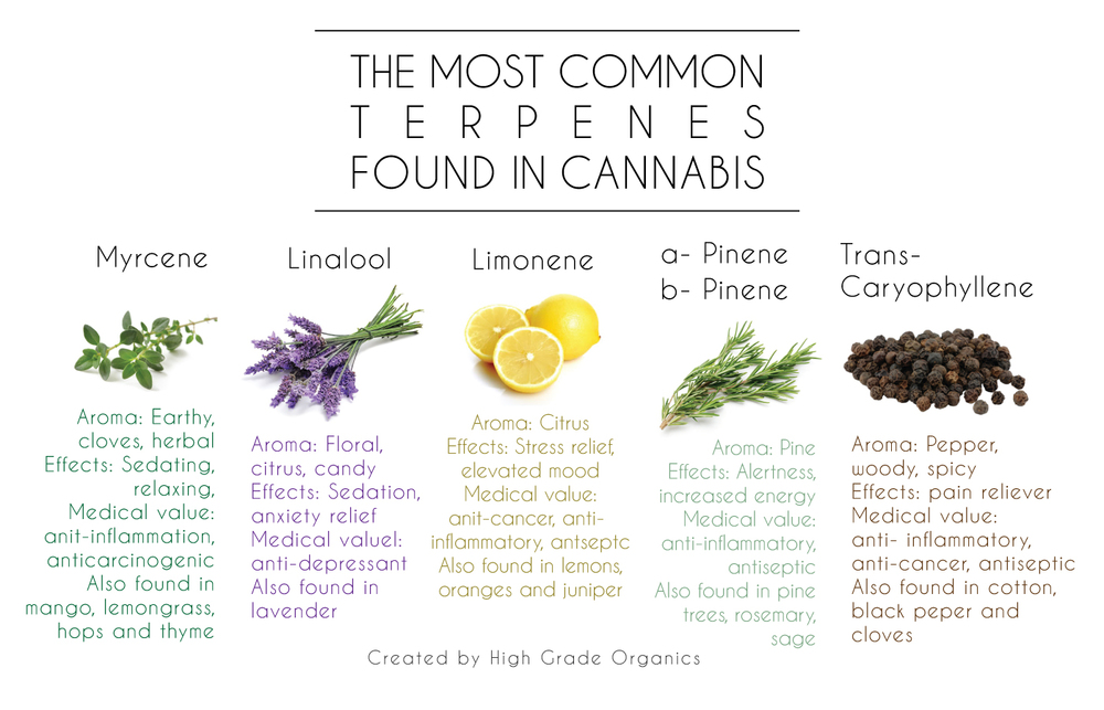 CBD Terpenes - What You Need To Know